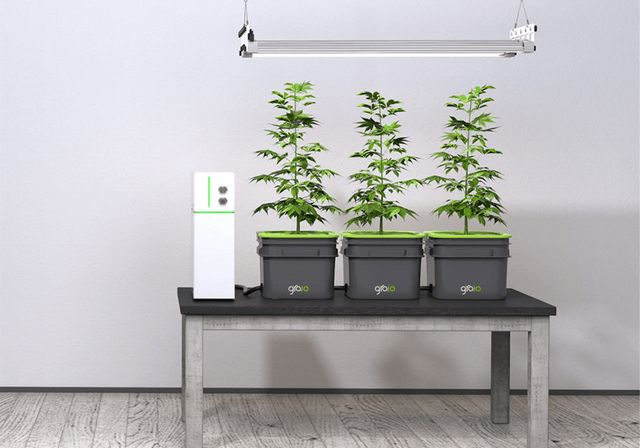 Iot Hydroponic Systems Hydroponic Garden System