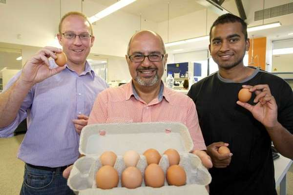 Eggsquisite Anti-Allergy Innovations