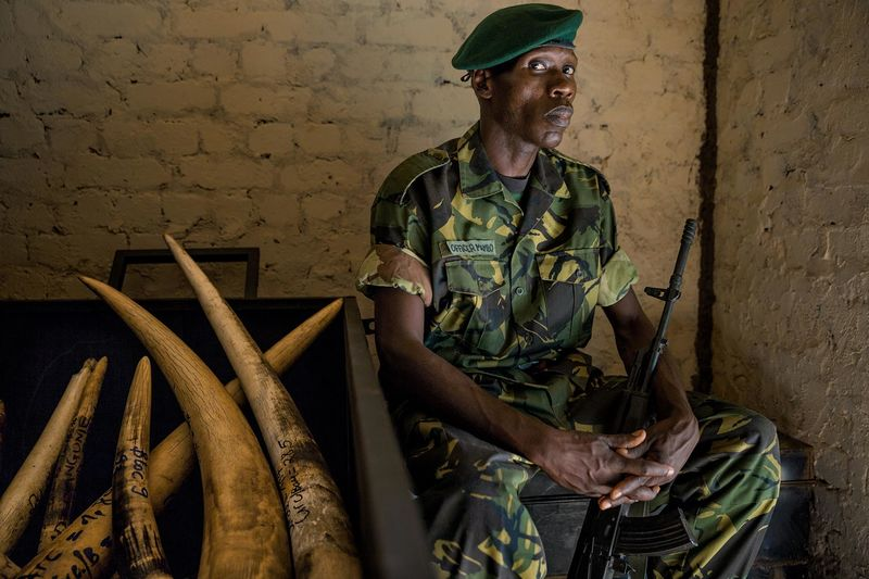Anti-Poaching Elephant Tusks