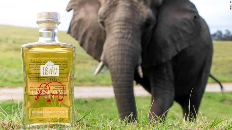 Elephant Feces-Infused Gins