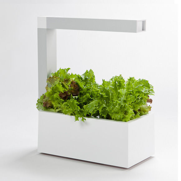 Modern planting pods indoor garden accessory for Indoor gardening trends