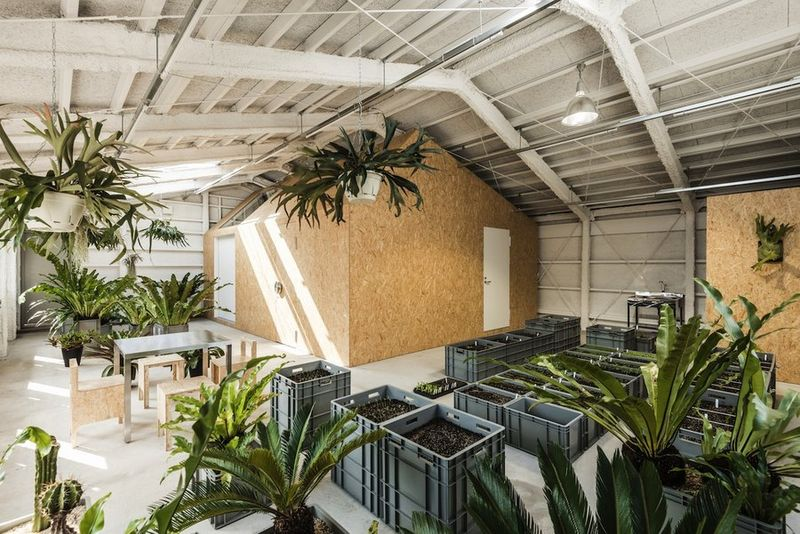 industrial indoor gardens this studio doubles as a practical greenhouse space