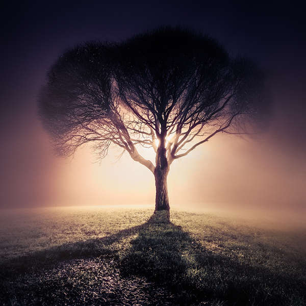Mystical Mist Photography