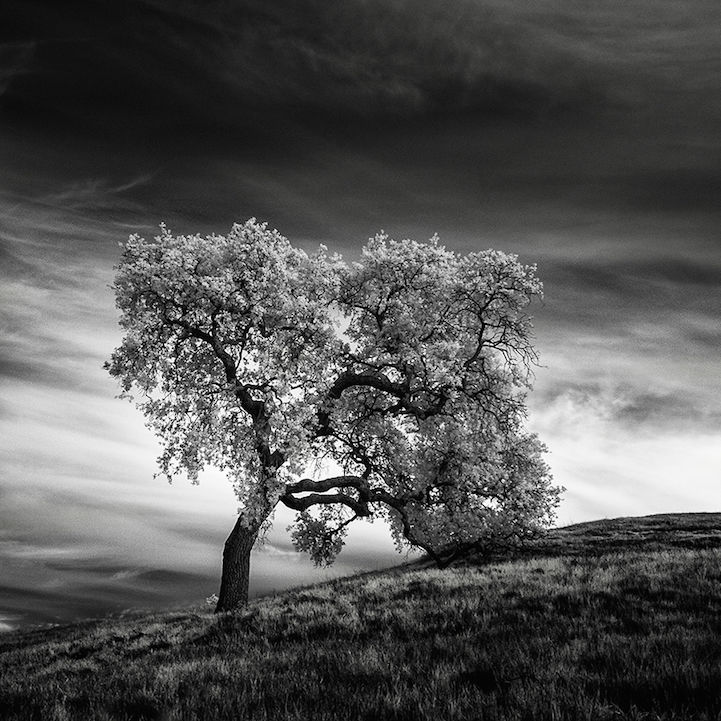 Desolate Infrared Photography
