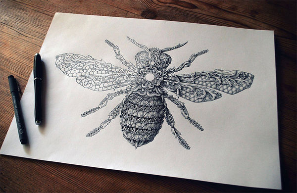 Ornately Noble Insect Drawings