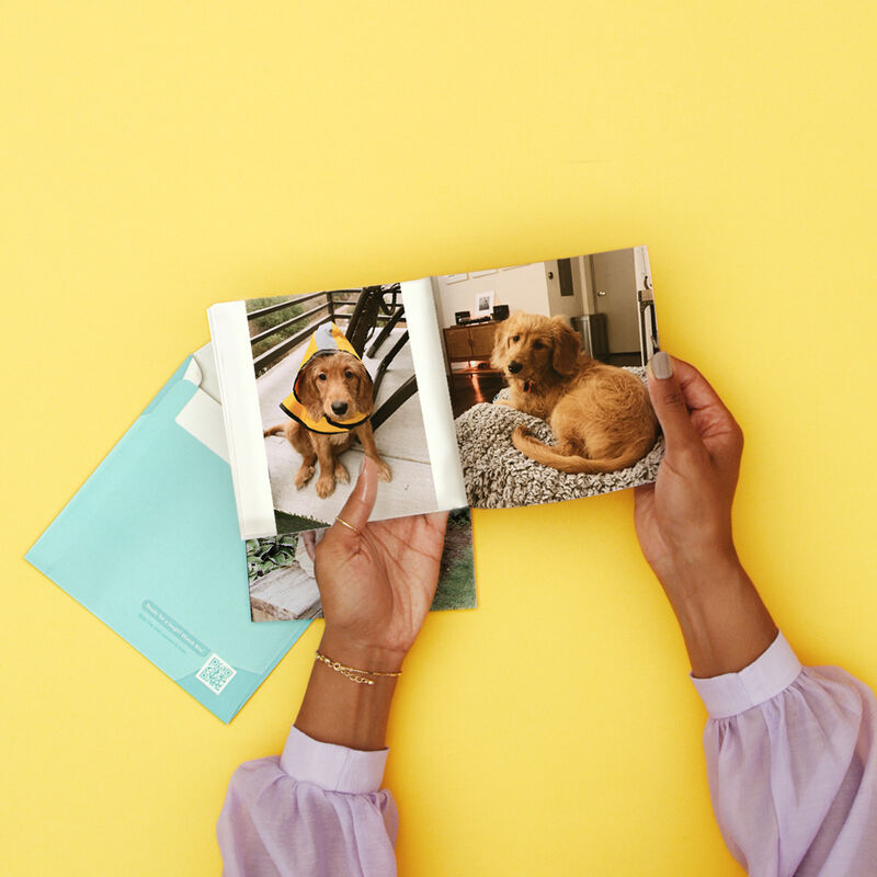 Cost-Free Pet Photo Books