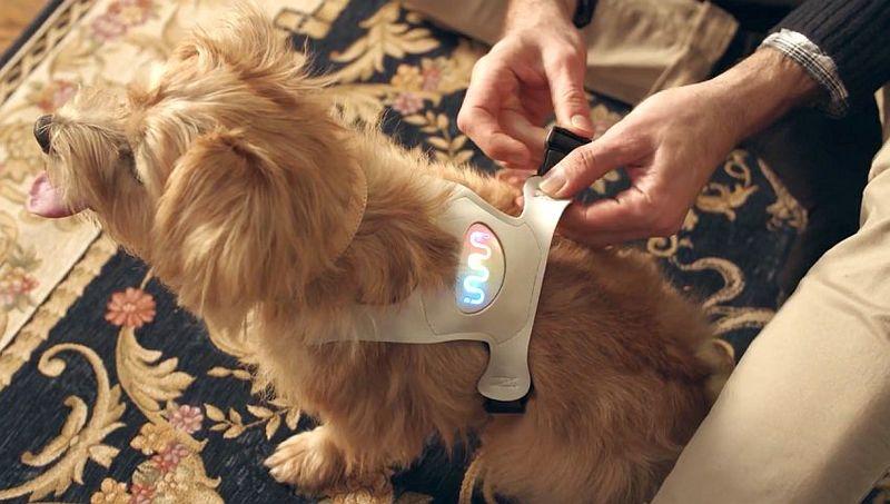 Emotive Canine Wearables