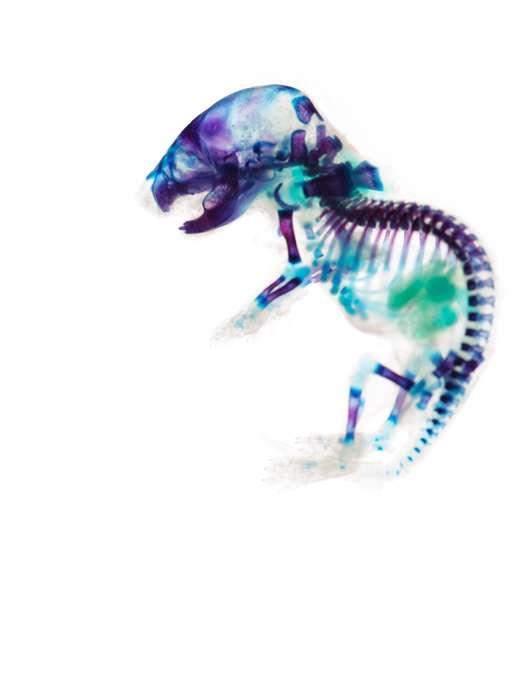 Transparent Animal Visuals