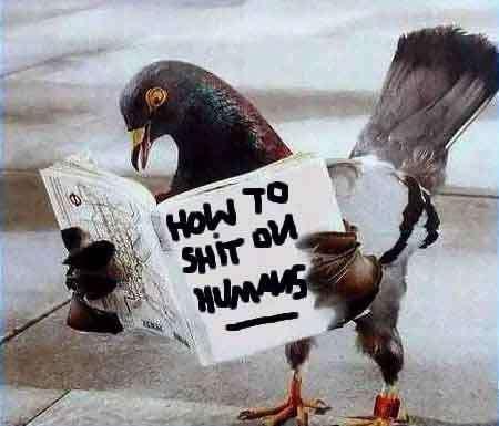 Spying Pigeons