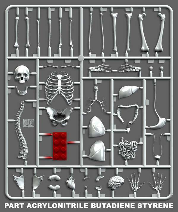 Quirky Anatomy Kits