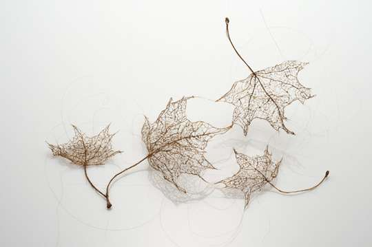 Hairy Flora Art Projects