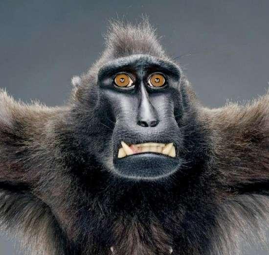 Primate Portrayals