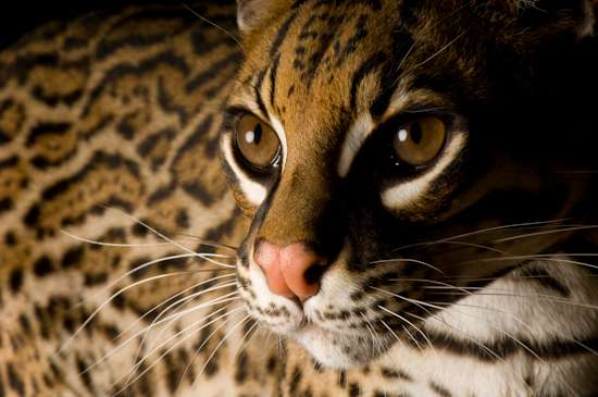Endangered Animal Photoshoots
