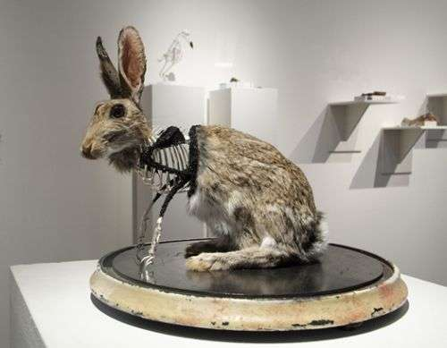Blinged-Out Taxidermy