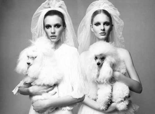 Duo-Dogged Brides
