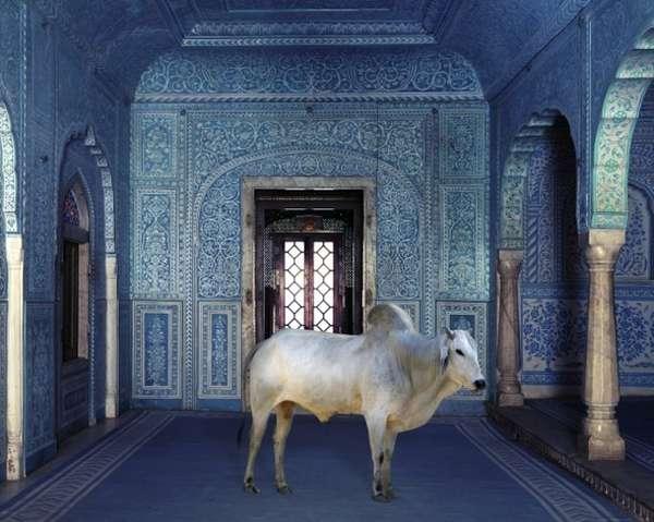 Sacred Animalistic Captures
