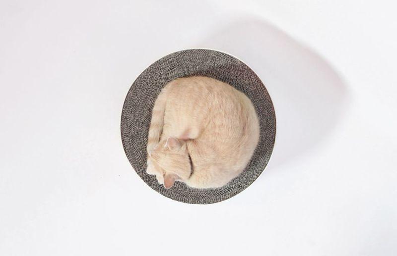 Dual-Purpose Pet Beds