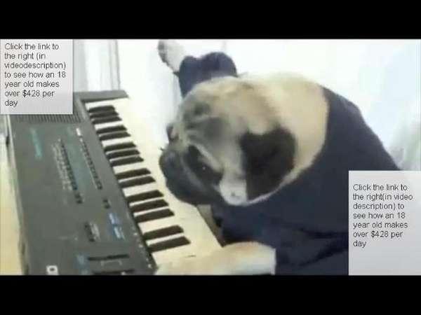 Viral Video Copycats