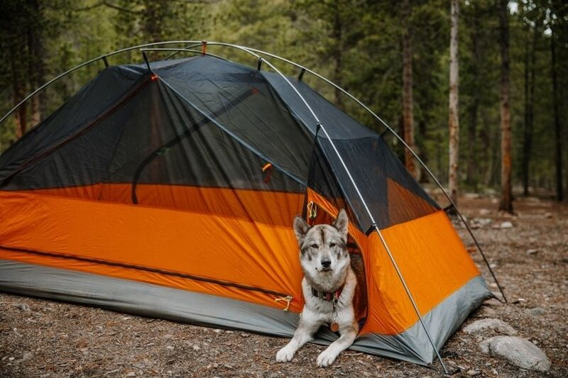 Canine-Friendly Camping Gear