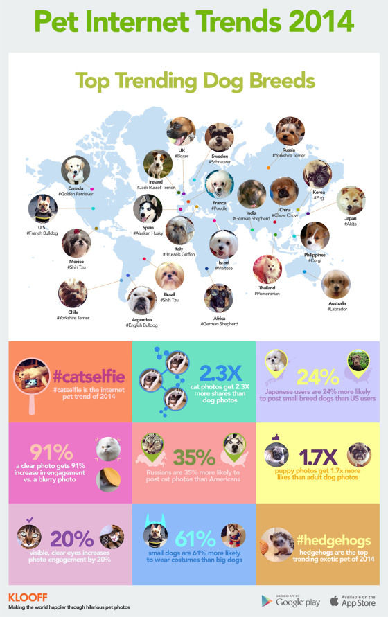 Intriguing Pet Infographics