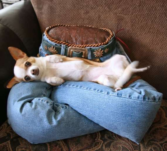 Canine Denim Beds