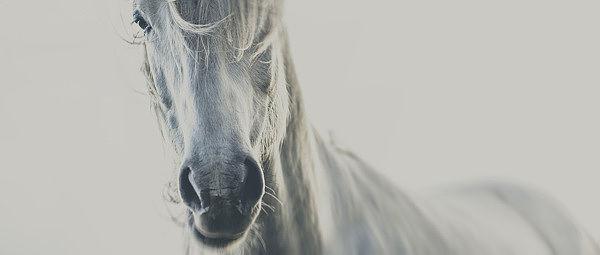 Stark Stallion Portraits
