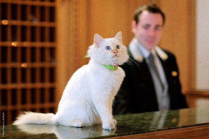 Luxury Hotel Resident Cats