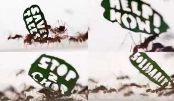 Insect-Incorporating Protests