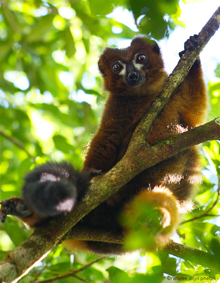Lemur-Tracking Facial Software