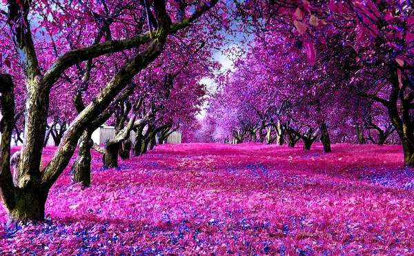 Fuchsia Landscapes