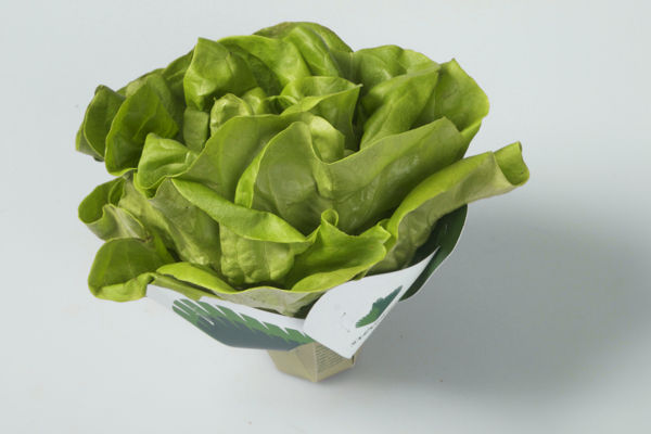 Biodegradable Lettuce Packaging