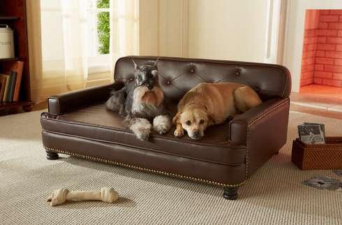 Etonnant Sophisticated Pet Sofas