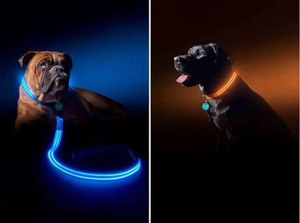 LED Light Leashes