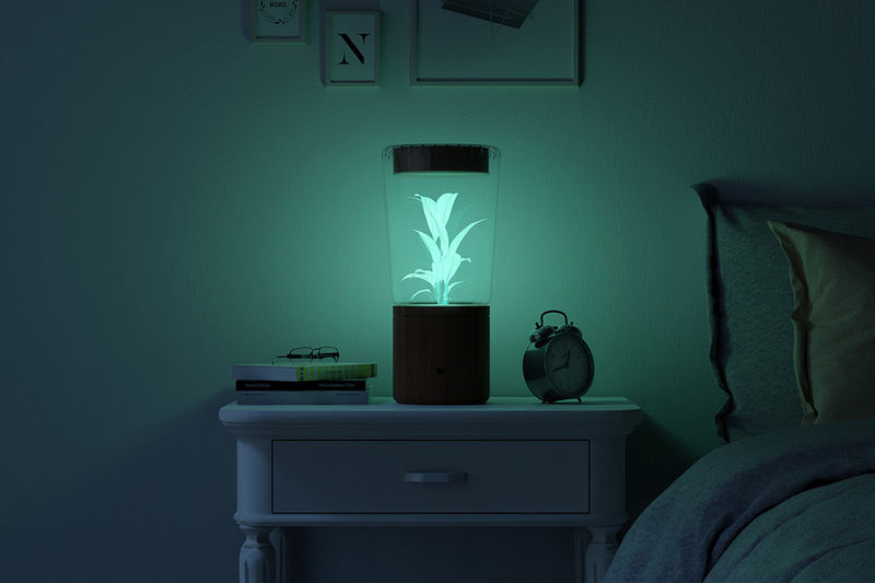 Bioluminescence Night Lights
