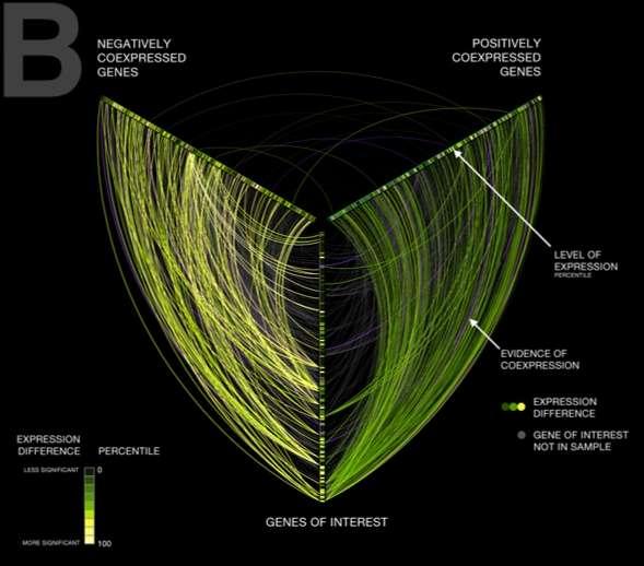Detangling Network Hairballs