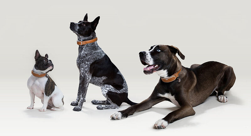 Health-Tracking Dog Collars