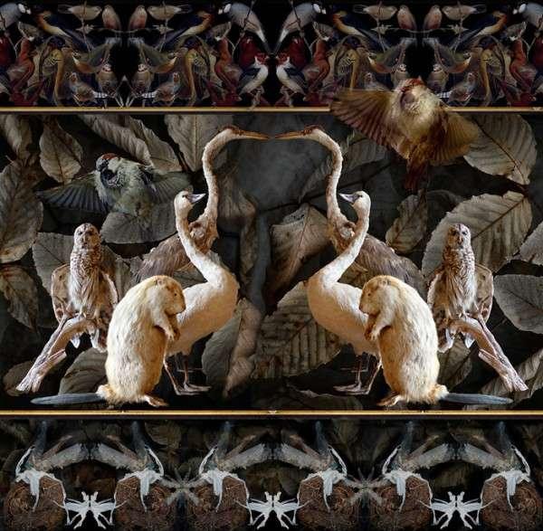 Ornate Organic Photography