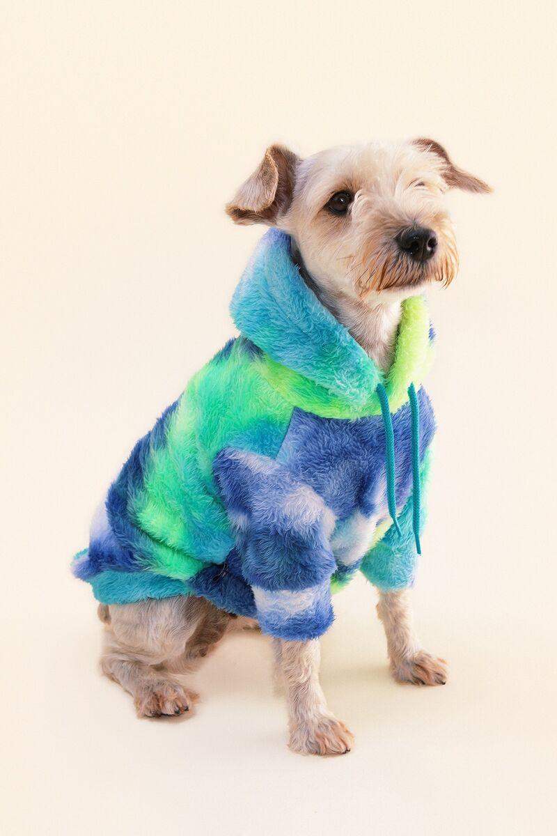 Stylish Dog Fall Fashion
