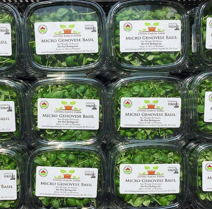 Organic Vertical Farms