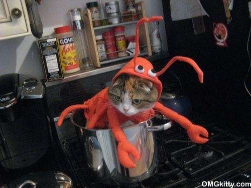 Lobster Cat Costumes