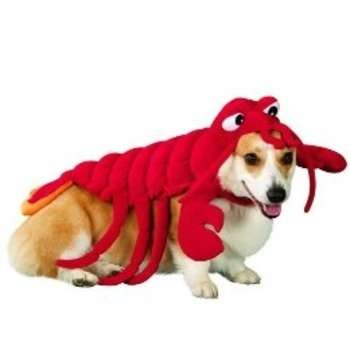 Crustacean Canine Wear