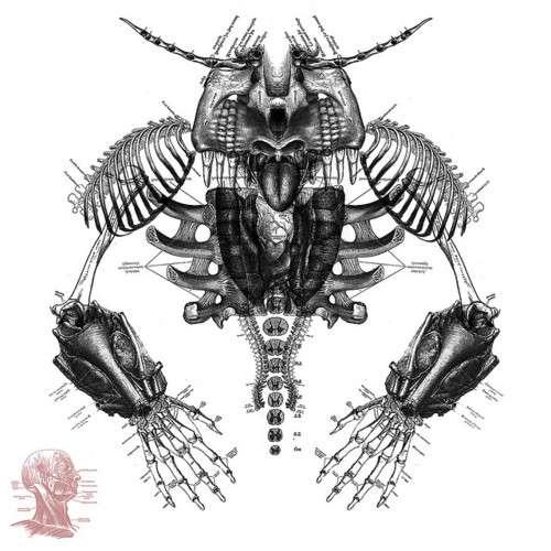 Monstrous Skeletal Anatomies
