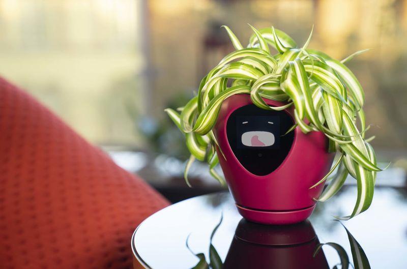 Anthropomorphized Planter Pots