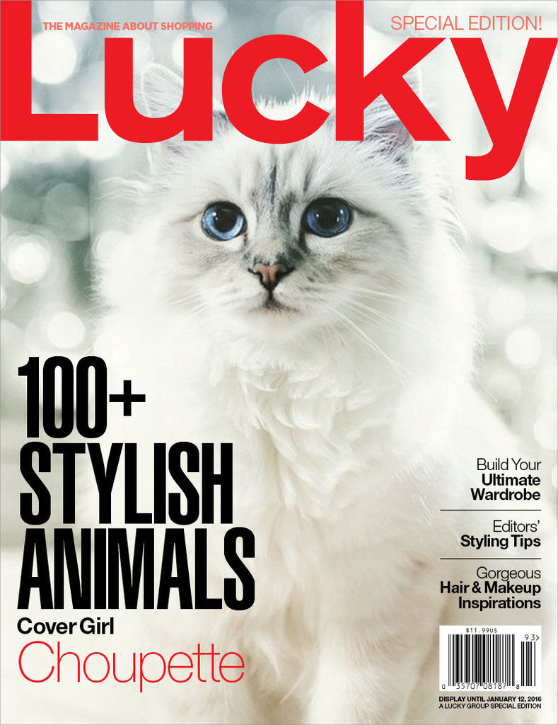 Lucky Dog Cats