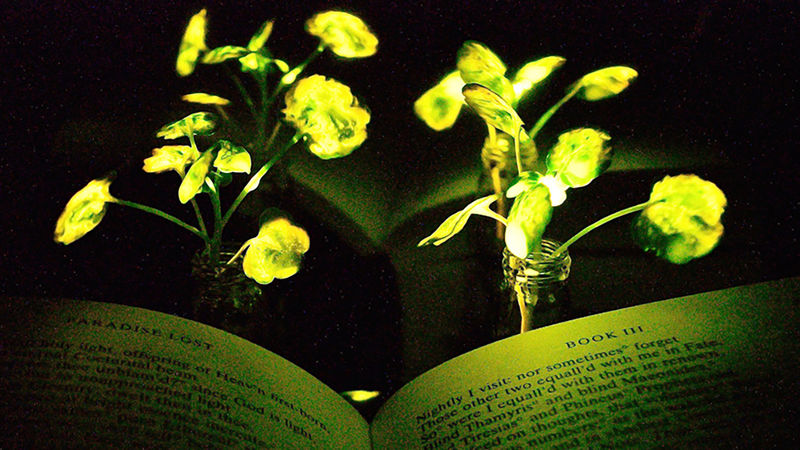 Man-Made Luminescent Plants