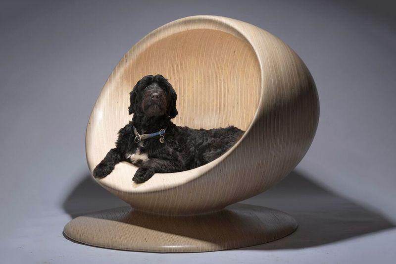 Extravagant Dog Kennel Exhibitions