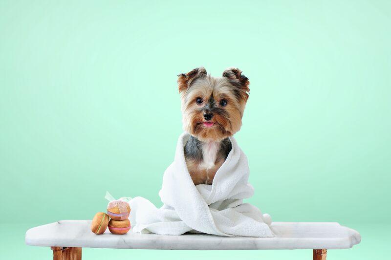 Dog-Friendly Macaron Treats
