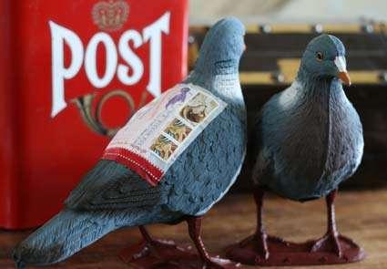 Literal Carrier Pigeons