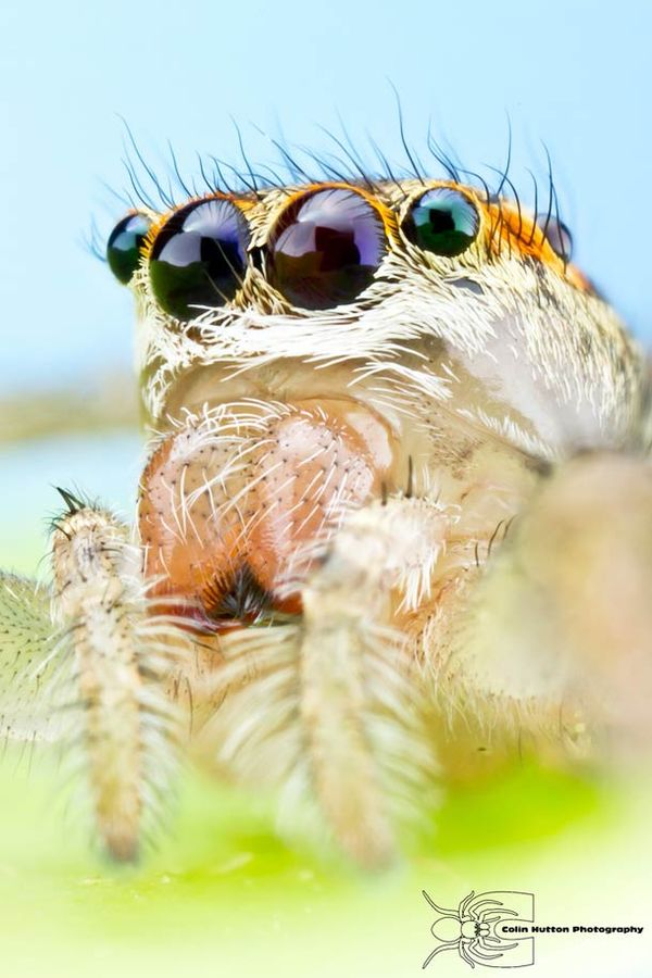 Extreme Insect Close-Ups