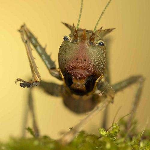 Cringe-Worthy Cricket Captures
